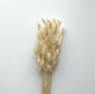 Nádherná dekoratívna sušená tráva bielej farby vo zväzku so steblami 35 - 55 cm.